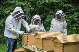 diy bee keeping with the baeumlers