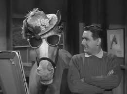 """Image result for 1979 - Mr. Ed, the talking horse from the TV show """"Mr. Ed"""", died."""