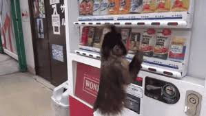 Vending Machine Gif Custom This Is How You Get Juice GIF Monkey Vending Machine Discover
