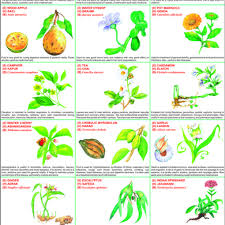 Educational Charts Manufacturers In India Medicinal Plants Chart Medicinal Plants Chart Manufacturer