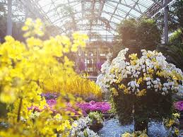 kennett square pa longwood gardens provides a colorful escape from the winter blues this season during orchid extravaganza running january 20 through