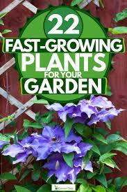 22 fast growing plants for your garden