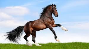 Horse Background Umage For Windows 10 Desktop