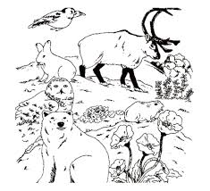 Small Picture Free Wildlife Coloring Book Coloring Pages Of Canadian Animals In