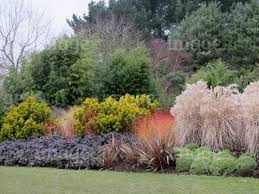 Small Picture Design Combinations Shrubs Conifers Grasses Bamboo Planting in