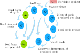 Flow Chart Of Weed Life Cycle Considered By The Models The