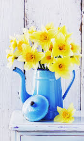 Best 25+ Daffodil ideas on Pinterest | Daffodils, Daffodil flower ...