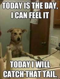 413 Humorous Dog Memes For Gleeful Time!