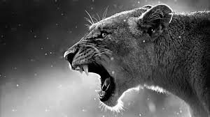 Howling Lion 4K Wallpapers - Top Free ...