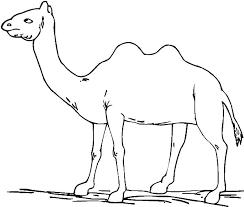 Camels Drinking Water Coloring Page Worksheet Free Printable