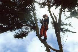 Why you should hire tree surgeons for your garden