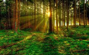 Green Forest Backgrounds Green Forest Hd Photo 1882