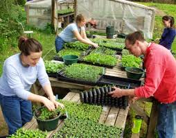 how to start an organic farm and greenhouse business green add caption