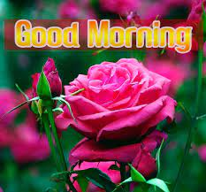 Flower Good Morning Images Pics Free ...