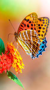 Butterfly iPhone Wallpapers - Top Free ...