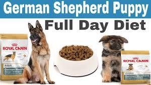 German Shepherd Puppy Full Day Diet Plan German Shepherd Dog Full Day Diet Plan