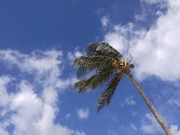 Palm tree Breeze Oahu Hawaii Photograph by Petra Smith