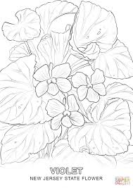 Small Picture New Jersey State Flower coloring page Free Printable Coloring Pages