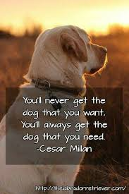 Quotes About Dogs And Friendship Gorgeous 48 Best For The Love Of Dogs Images On Pinterest Doggies Cats