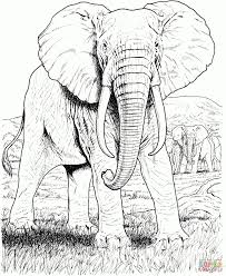 Coloring Pages Of Elephants African Elephant Coloring Page Free