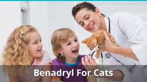 Benadryl For Cats Dosage | How Much Can You Give Them For Allergies?
