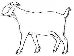 Goat drawing photo 12