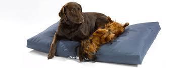 Afbeeldingsresultaat voor grappige honden benodigdheden