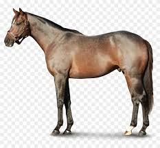 1800 x 1371 7 horse hd png