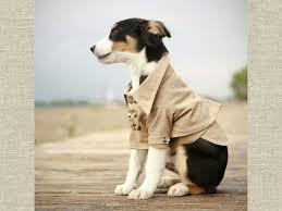 dog in trench coat