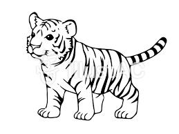 虎のこども 白黒イラスト No 360016無料イラストならイラストac