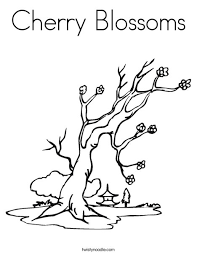 Small Picture Cherry Blossoms Coloring Page Twisty Noodle