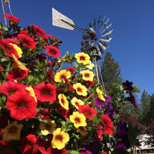 fred meyer garden center. Perfect Fred Garden Springs Center Added 3 New Photos With Fred Meyer F
