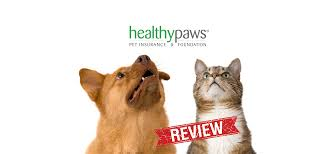 healthy paws pet insurance reviews healthy paws reviews 1 pet insurance vet
