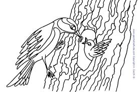 Uccelli Da Colorare Con Uccelli Disegno Per Bambini E Pic4260o Con