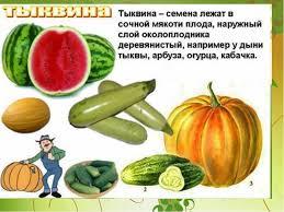 Экзотические плоды Реферат Реферат виды плодов