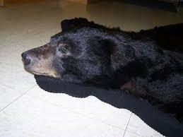 chair amusing fake bear skin rug with head black closed mouth fake bear skin rug with