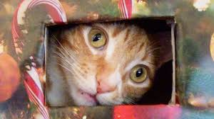 Country Christmas  Mewmews  Pinterest  Cat Animal And KittyCat Themed Christmas Tree