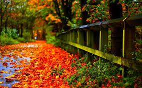24+ Autumn Leaves Falling Hd Wallpaper ...
