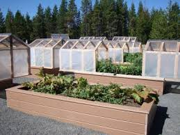 mini greenhouses or raised beds