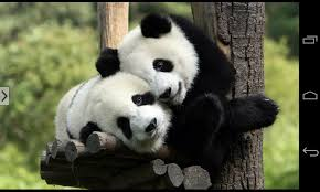 Cute Animal Wallpapers and Pictures ...