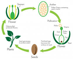 Venn Diagram Of Asexual And Sexual Reproduction Introduction To Reproduction Plants Animals Types