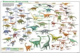 Evolution Chart Of Vertebrate Evolution Evolution Of