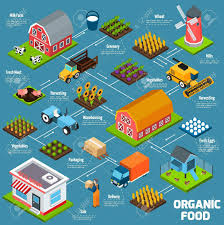 Organic Food Production Process Flowchart With Products Growing