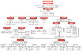 Organizational Structure Nuvelco