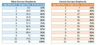 Male Female German Shepherd Growth Chart Female German