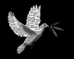 Αποτέλεσμα εικόνας για περιστέρι της ειρήνης