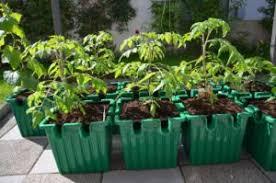 Oasesbox Self Watering Planter