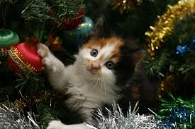 Kitty Christmas Wallpapers - Wallpaper Cave