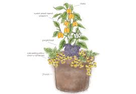 How To Grow Fruits Vegetables And Herbs In A Container Garden Container Garden Plans Tomatoes