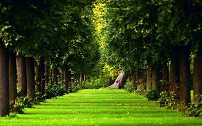 nature wallpapers high resolution green. Plain Nature And Nature Wallpapers High Resolution Green W